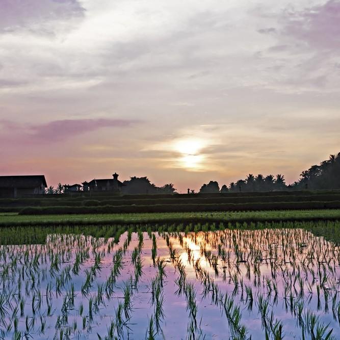 Riso-jolanda-Produzione-vendita-riso-carnaroli-arborio-vialone-integrale-farina-di-riso-semola-di-riso11